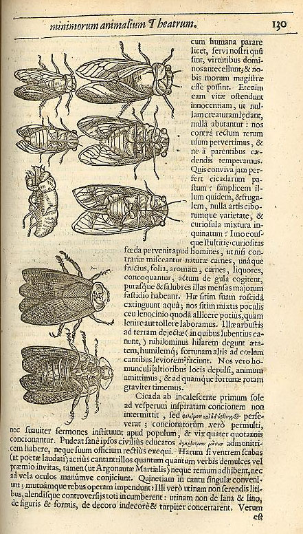 Another image from Moffett's Insectorum