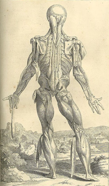 Another image from Vesalius' Opera